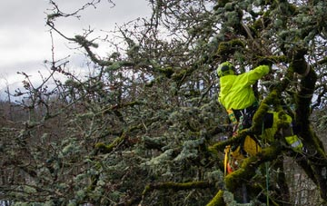 experienced Dundee arborists are needed