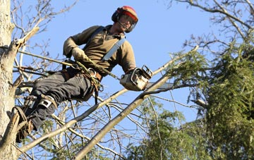hiring experienced Dundee tree surgeons