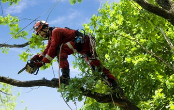 find trusted rated Dundee tree surgeons in Dundee City