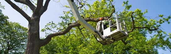 Dundee tree surgery services