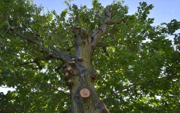 what is Dundee tree surgery?
