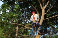 Dundee tree crown reduction services
