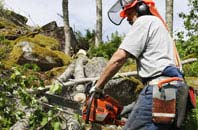 compare tree surgeon costs