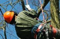 free Dundee tree surgeon quotes